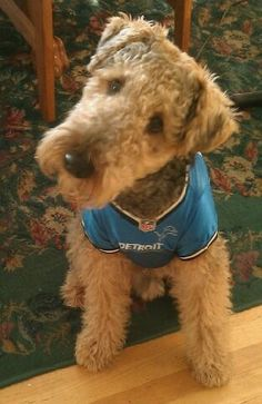 Airedale.  The head tilt gets me every time. My boy does it when he is asked a question.  I love it!