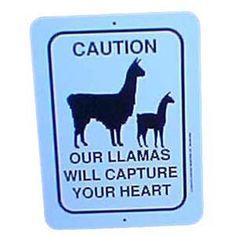Quality Llama and Alpaca Products - Alternative Livestock Supply Alpacas, Mythological Animals, Animal Tracks, Like Me, My Love, Llama Alpaca, Make Me Happy, Spirit Animal, Puppy Love