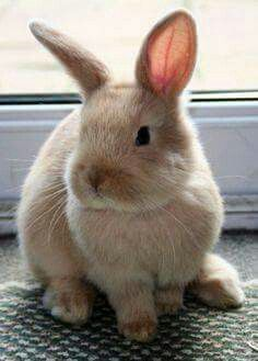 Canelita- What a beautiful bunny!