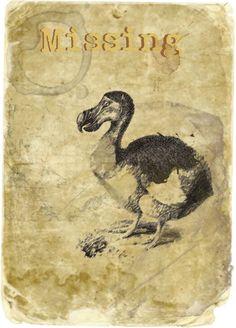 """Dodo Bird Poster"" by penchitu on Polyvore"