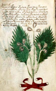 The Voynich Manuscript Voynich Manuscript, Medieval Manuscript, Botanical Illustration, Botanical Prints, Codex Gigas, Codex Seraphinianus, Urban Sketching, Occult, Book Worms