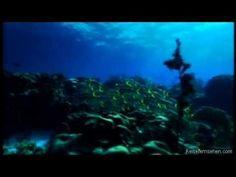 Bonaire: Diving / Duiken (Dutch/Nederlands) by Reisefernsehen.com - Reisevideo / travel video