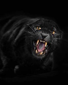 . Photo by @suhaderbent Black Leopard.#nature #wildlife #BlackLeopard #Leopard #animal #naturebysuhaderbent #eye