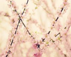 Cherry Blossom by janice