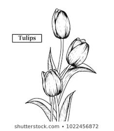 Hand Drawn Illustration Sketch Tulips Flower Stock-Vektorgrafik (Lizenzfrei) 1022456872 Hand Drawn I Tulip Flower Drawing, Flower Pattern Drawing, Flower Drawing Tutorials, Flower Sketches, Floral Drawing, Watercolor Flowers, Pencil Art Drawings, Art Drawings Sketches, Illustration Sketches