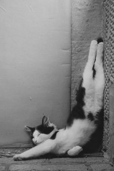 #Cats can relax vertically