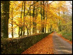 by jadesgran Autumn is here and the trees are turning into vivid golden tones.This is a bye road between Lewtrenchard and Lydford. Devon England, Walking Paths, Winding Road, Back Road, Photoshoot Inspiration, Beautiful Wall, Pathways, Moonlight, United Kingdom