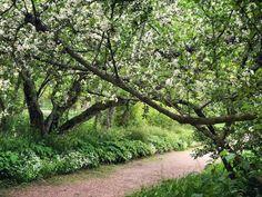 A rainy day walk #iphonephotography #rainydayinthepark #meilahdenarboretum #meilahti #myhelsinki #finland #parklove #treelovers #path #arboretum #bloomingtrees #oldtrees #puisto #helsinginpuistot #beautifuldestinations #dreaming #goingplaces #myuusimaa #inspirationalplaces Blooming Trees, Old Trees, Iphone Photography, Finland, Paths, Country Roads, Day, Inspiration, Instagram