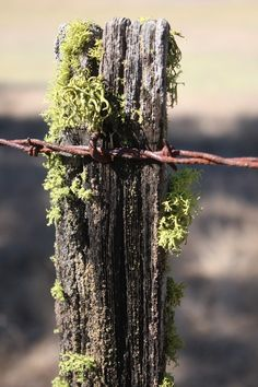 Moss On Barbed Wire Fence