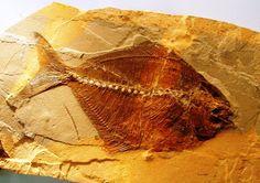 L'angolo della Geologia: Bolca - Un Paleosito Italiano