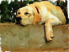 Siesta #dog #dogart #petportrait