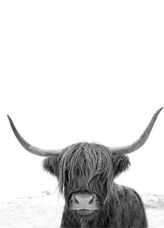 Highland Cow Art Print | Highland Cow Photography | Highland Cattle | Black and White Print by Little Ink Empire on Etsy