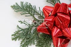 Cedar and Red Bow Royalty Free Stock Photo