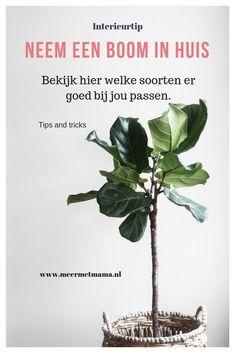 Huis inspiratie   Home   Planten   inspiratie   Kamerplanten   Boom   Tree   Kamerboom   Groen   Diy Hacks, New Homes, Homemade, Tips, Coaching, Plants, Blog, Happy, House