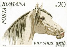 Romanian Horse Stamp 1970