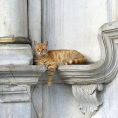 Relaxing on marble (Eyüp) Cats are excellent at finding crannies!