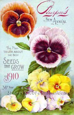 Burpee's Seed Annual 1910 ~ Vintage Seed Catalog Art ~ Cross Stitch Pattern #StoneyKnobFarmHeirlooms #FramedPicture
