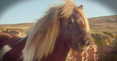 This pony will make you smile with its hilarious dance moves. The pony's moves may not be entirely real, but this little dose of silliness really made my day. And I'm sure it'll make you smile! Mary Mays Tiny Horses, Horse Videos, Advertising And Promotion, Dance Moves, Videos Funny, Little Pony, Make You Smile, Hilarious, Shetland Ponies