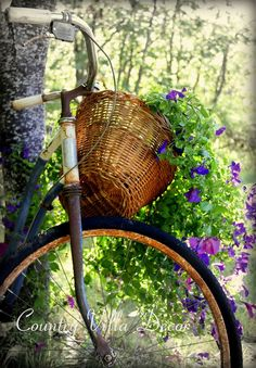Chantel's old bike now has flowers growing from the basket.......charmont.
