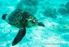 Untitled by Woody-DonWoodiwiss #nature #photooftheday #amazing #picoftheday #sea #underwater