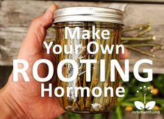 Make your own rooting hormone from willow twigs