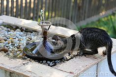 Photo about Kitty drinking water from edge of fountain. Image of gush, head, clip - 76739366 Drinking Water, Fountain, Kitty, Stock Photos, Outdoor Decor, Animals, Image, Little Kitty, Animales