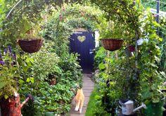 My Cat Garfield is in the Garden .