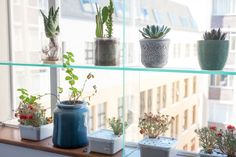 Lei built a custom-glass shelving unit in the bedroom window, which acts as a mini-greenhouse.