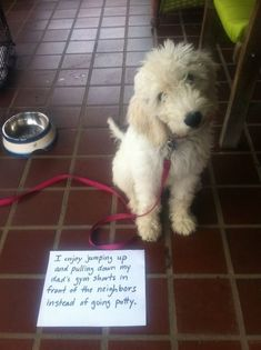 Dog Shaming features the most hilarious, most shameful, and never-before-seen doggie misdeeds. Join us by sharing in the shaming and laughing as Dog Shaming reminds us that unconditional love goes both ways. Funny Animal Memes, Dog Memes, Cute Funny Animals, Funny Animal Pictures, Funny Cute, Funny Dogs, Funny Memes, Hilarious, Dog Humor