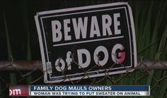 Dog Mauls Whole Family After They Attempt to Put a Christmas Sweater on Him - https://therealstrategy.com/dog-mauls-whole-family-after-they-attempt-to-put-a-christmas-sweater-on-him/