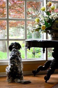 Amor Animal, Looking Out The Window, The Fox And The Hound, English Style, English Manor, English Homes, Autumn Home, Mans Best Friend, Dear Friend