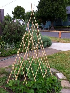 Angled bamboo garden trellis