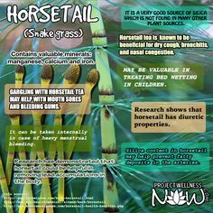Horsetail is a weed that grows in abundance all over the world. Its health benefits were recognized in ancient Rome and Greece where it was used as a remedy for many various conditions. #herbs #wellness #remedies #health