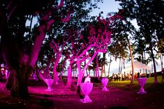 Fuchsia lighting transforms the grove of trees at Lanikuhonua Phase II into a magical space.  Photo by Chrissy Lambert Photography.