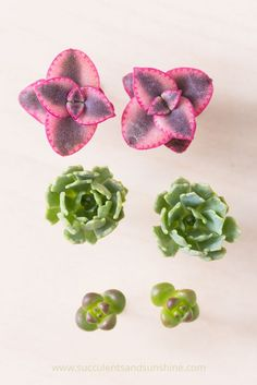 These are amazing! Make earrings with living succulents!