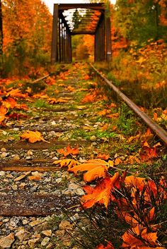 """Falling Again"" ~ Autumn on Vancouver Island, Vancouver, British Columbia, Canada … notice the train tracks in the photo. Beautiful Places, Beautiful Pictures, Autumn Scenes, Fall Pictures, Fall Pics, All Nature, Train Tracks, Fall Season, British Columbia"