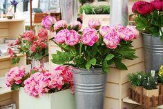 pretty Poney flowers