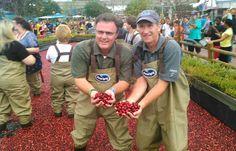 Ocean Spray's Cranberry Harvest Bog Returns For the 20th Epcot International Food & Wine Festival   The Disney Blog