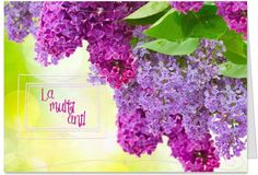Syringa vulgaris (lilac or common lilac) is a species of flowering plant in the olive family Oleaceae Wallpaper Pc, Lilac Bouquet, Syringa Vulgaris, Lilac Blossom, Shrubs, Planting Flowers, Vines, Plants