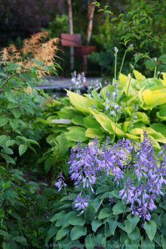Shade Garden Ideas, Books & Inspiration. Garden Design & Photography: Michaela Medina - thegardenerseden.com