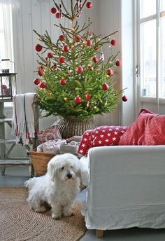 He (she?) has his own little chair? How darling! AND the little tree is darling too. :-)
