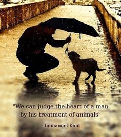 we can judge the heart of a man by his treatment of animals - Immanuel Kant