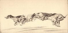 DESCRIPTION: Original 1935 canine bookplate print from the original etching of Greyhounds / Whippets titled: Stream Line. ARTIST: Diana