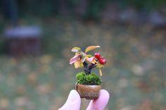 モミジのミニ盆栽の画像 | 超ミニ盆栽のブログ