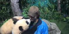 Cuteness overload:  Lee Pace with special friend at Research Center for Giant Panda Breeding in Chengdu, China.
