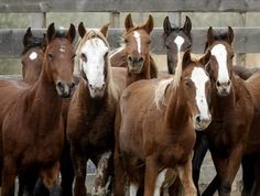 Navajo Nation Agrees to End Horse Roundups for Slaughter | Rate My Horse PRO
