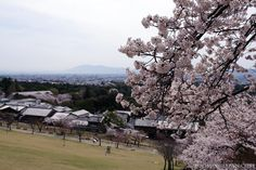 Nara Park in spring. #japan #travel