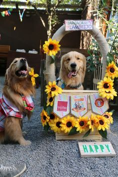 Foto: DoggieBag