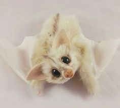 White Spirit Bat Realistic Art Doll RikerCreatures