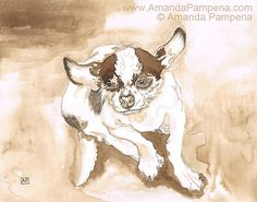Chihuahua Dog Fine Art Print Little Bandit by AnimalsbyAmanda